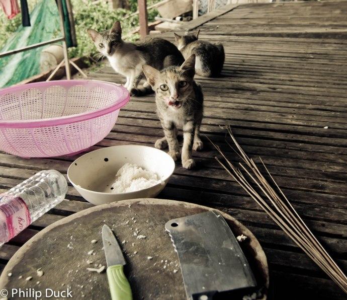 Ko Dach, Cambodia